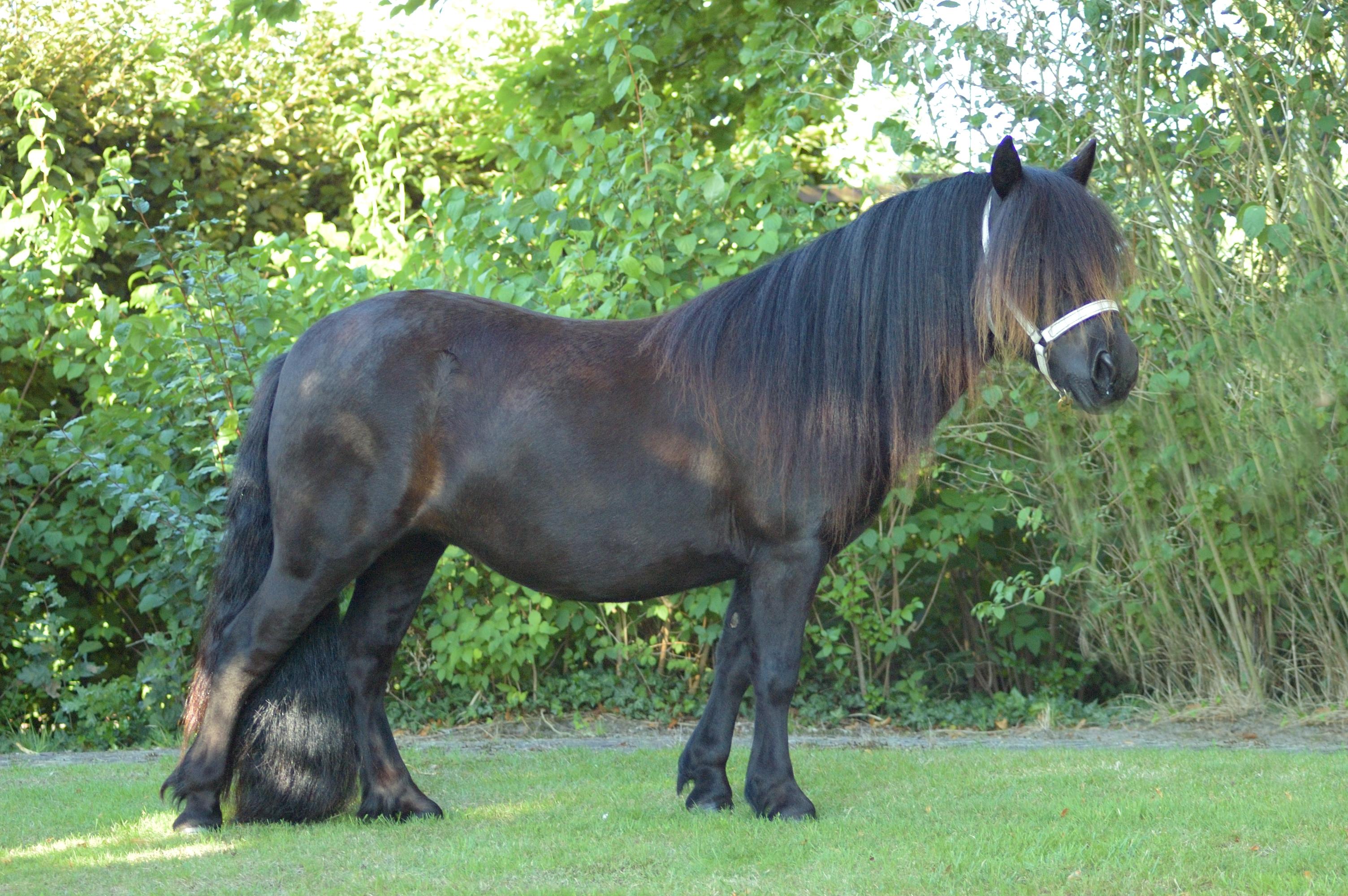 hestella-v-d-belschuur